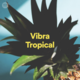 MALENA // VIBRA TROPICAL
