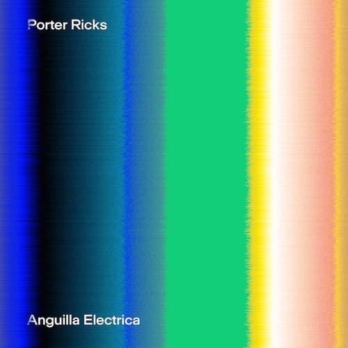 Anguilla Electrica