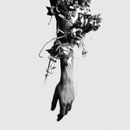 Flowers Of Romance