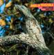 Birds Of Venezuela (Introduction By David Toop)