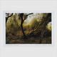 Lubomyr Melnyk : Fallen Trees Art Print